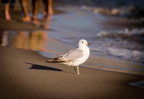 beachday-9